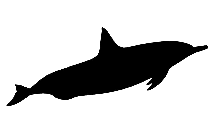 Transparent Shark Outline Silhouette, Shark Outline Png Image
