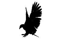 Eagle Bird Flying Picture