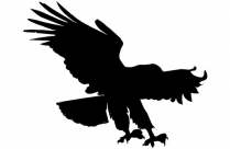 Harpy Eagle Png Silhouette Transparent Background