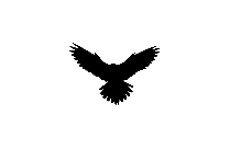 Eagle Head Png Drawing