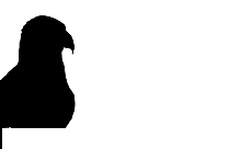 Best Eagle Flying Silhouette Transparent Background