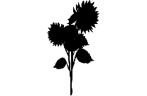 Transparent Fall Sunflower Png For Free