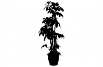 Plant In Soil Png, Transparent Plant In Soil Image