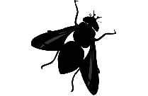 Transparent Fly Picture