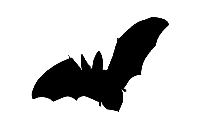 Flying Sparrow Png Free,  Vector Png