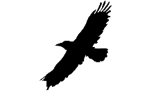 Transparent Flying Bird Silhouette, Png Clip Art