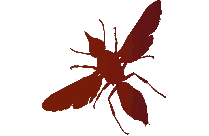 Mayfly Png Clipart Download
