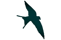 Transparent Flying Swallow Bird Clipart, Flying Swallow Bird Png Image