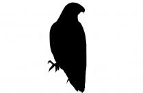 Eagle Png Image Clipart