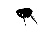 Transparent House Bug Silhouette, House Bug Png Image