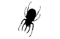 Transparent Insect Png