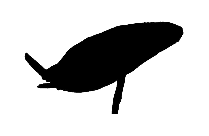 Transparent Dolphin Png For Free