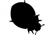 Transparent Baby Ladybug Png For Free