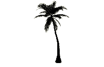 Palm Tree Png Transparent Image For Download