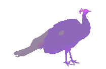 Transparent Peacock Silhouette Png