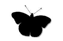 Transparent Queen Butterfly Clipart, Queen Butterfly Png Image