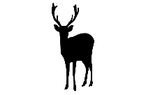 Baby Deer Head Png With Transparent Background