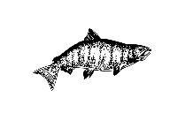 Salmon Png Hd Transparent Wallpaper