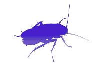 Transparent Cockroach Clipart, Cockroach Png Image