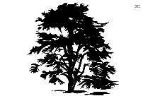 Tree Png Free Clipart