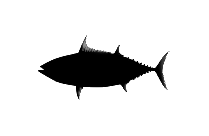 Transparent Caranx || Sea Animals Clipart, Caranx || Sea Animals Png Image