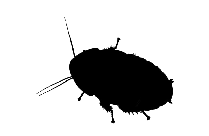 Roach Art Png Image Clipart