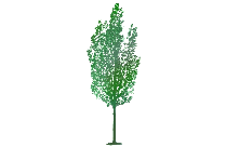 Transparent Tree Texture Clipart, Tree Texture Png Image