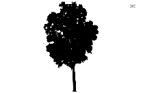 Tropical Tree Png Silhouette