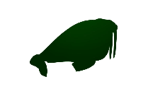 Walrus Png Free Transparent Clipart