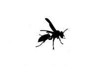 Wasp Bees Hornet Png Transparent Clipart For Download