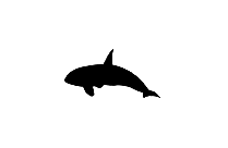 Whale Fish Png Clipart Download