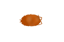 Woodlouse Png Clipart Free Download