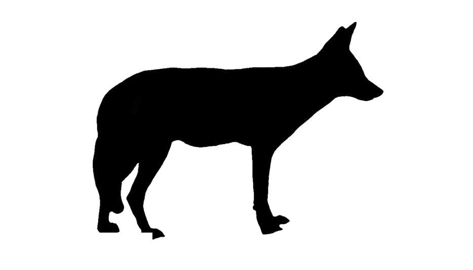 Wild Animal Clipart PNG Image