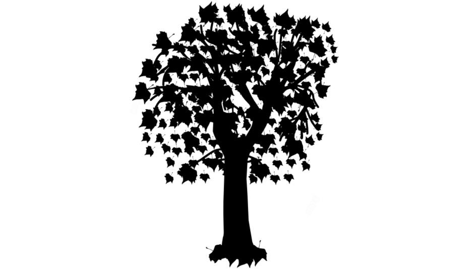 Transparent Maple Tree Drawing, Maple Tree Png Image