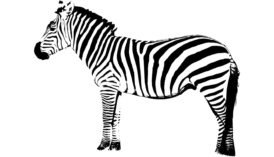 Transparent Zebra Picture