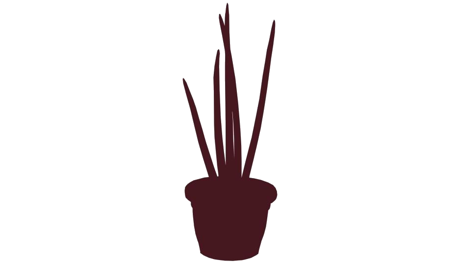 Plant Pot PNG Transparent Images