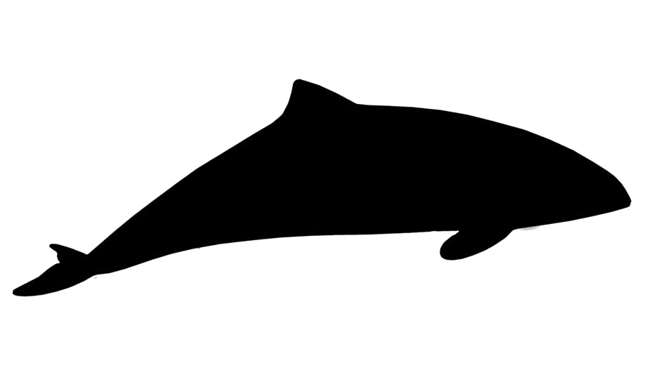Whale Fish Hd Png Download
